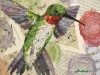 HUMMINGBIRD8lo