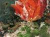 Desert Flora 12 x 9