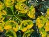 springtime-gophermedlo